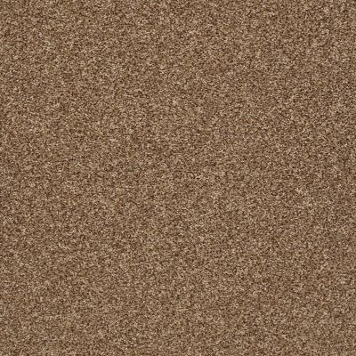 Shaw Floors Value Collections Super Buy 65 Spruce 00702_E9601