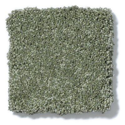 Shaw Floors Anso Colorwall Gold Texture Toscana Italia 00337_EA571