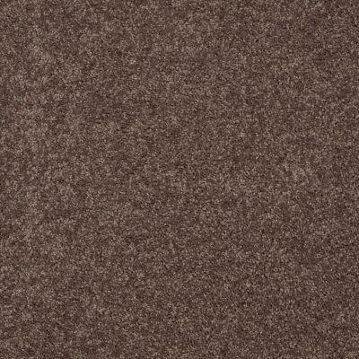 Shaw Floors Roll Special Xv375 Molasses 00710_XV375