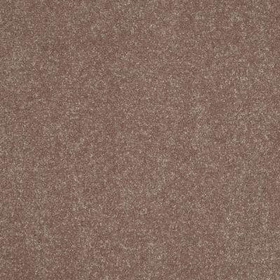 Shaw Floors Roll Special Xv425 Dutch Cocoa 00703_XV425