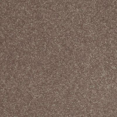 Shaw Floors Roll Special Xv425 Mink 00704_XV425