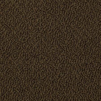 Shaw Floors Roll Special Xv480 Amazon 00304_XV480