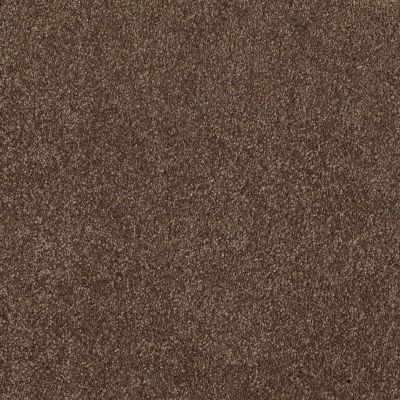 Shaw Floors Roll Special Xv815 Sedona 00708_XV815