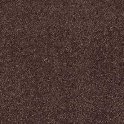 Shaw Floors Roll Special Xv930 Peppercorn 00717_XV930