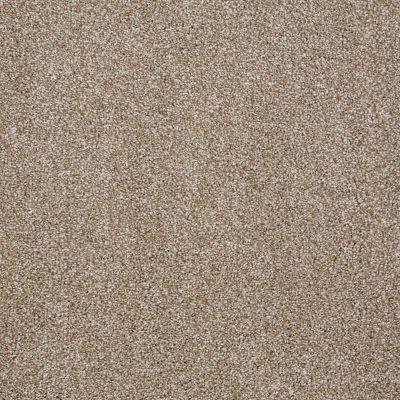 Shaw Floors Roll Special Xv931 Mole Hill 00719_XV931