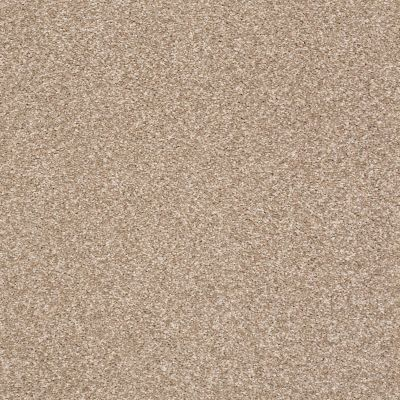 Shaw Floors Roll Special Xy228 Greige 00103_XY228