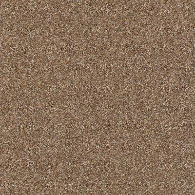 Shaw Floors Roll Special Xy228 Chestnut 00703_XY228